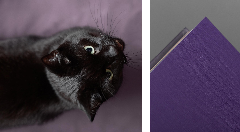 Häxan bild 4. Detalj ur bok och katt.